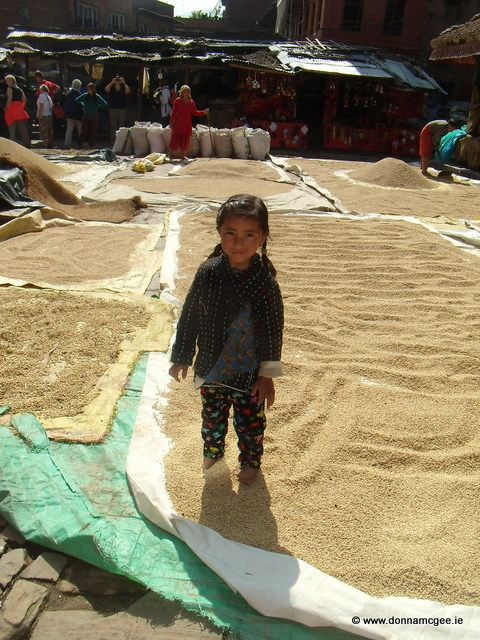 Drying the rice harvest along the streets in Bhaktapur