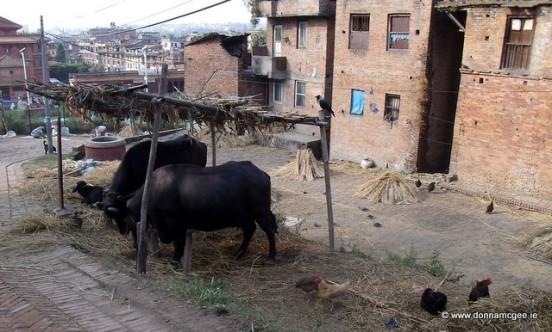 Street life in Nepal